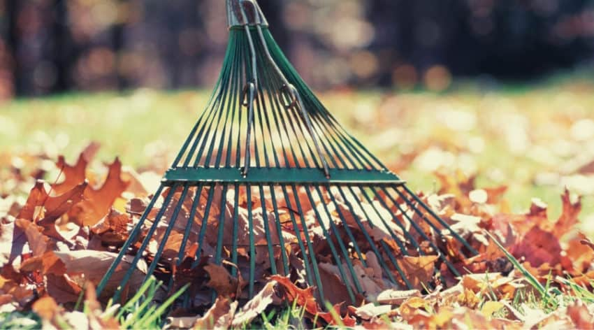 The Best Rake for Those Autumn Leaves