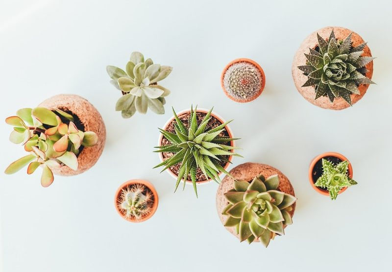 46 Succulent Terrarium Ideas Easy, In-Home Greenery