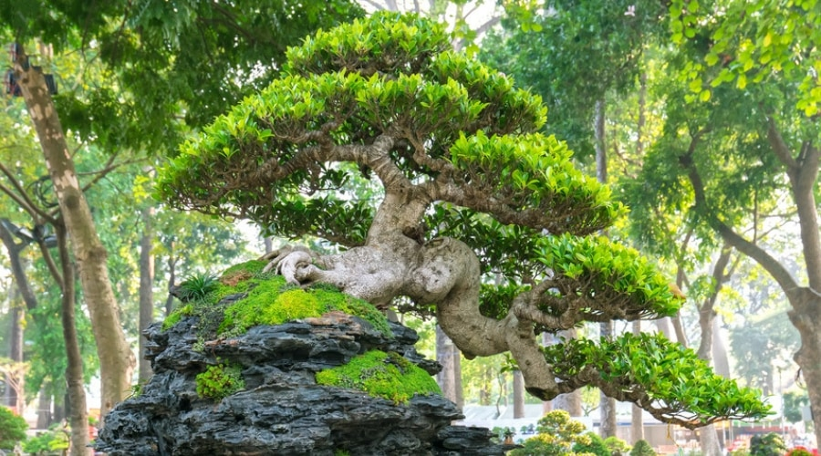 Featured Image - 29 Gorgeous Pictures of Bonsai on Rocks #17 is Amazing!