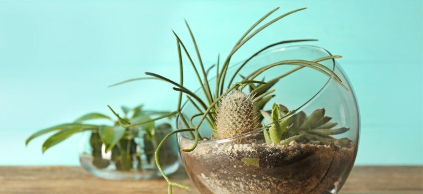 Featured Image- 18 Awesome Succulents for Indoor Gardens