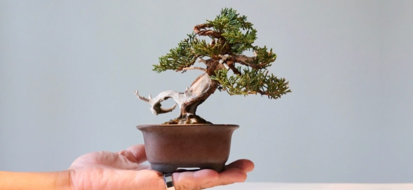 23 of the Smallest Bonsai Trees
