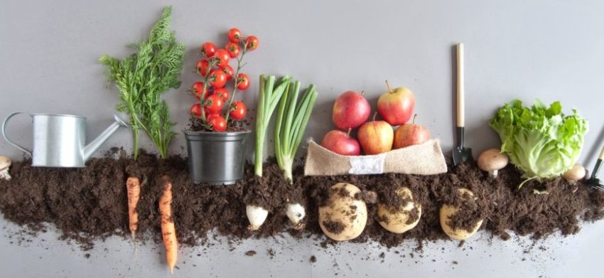 Everything You Need to Know About Companion Planting