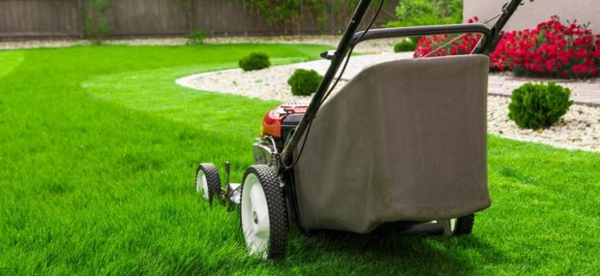 Lawn Care Tip Guide for a Healthy Lawn