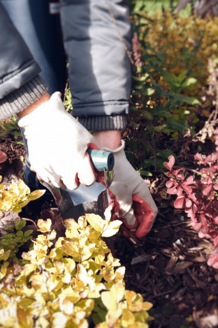 woman planting spring bulbs in fall garden