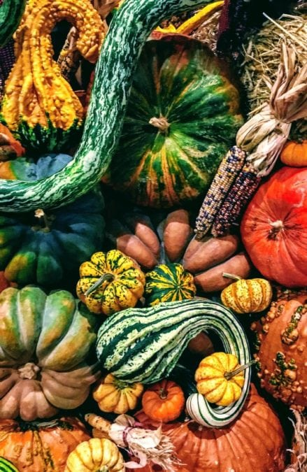 gourds in all colors and sizes harvested from a fall garden