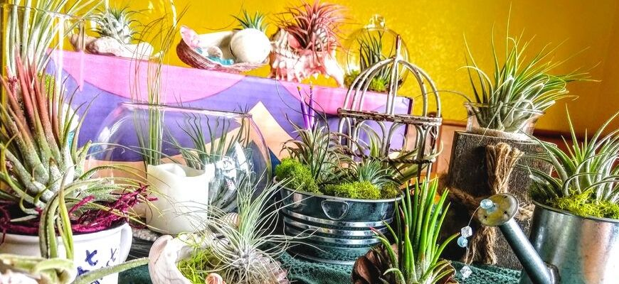 A Guide to Growing and Caring for Air Plants - Feature Image
