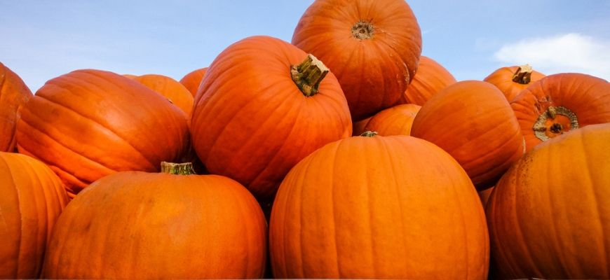 giant pumpkins with sky background