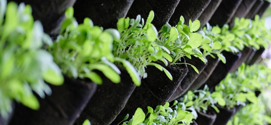 Cropped view of vertical garden.