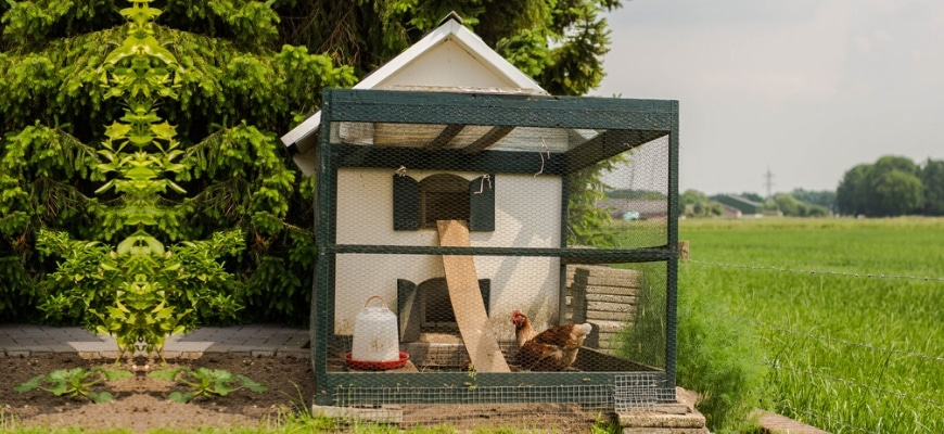 A chicken coop with a hen inside place near a barb fence.