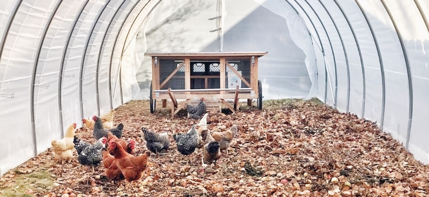 Best Chicken Coop Types for your hens - flock of chickens