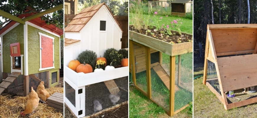 Chicken Coop Plans for Small Flocks - collage