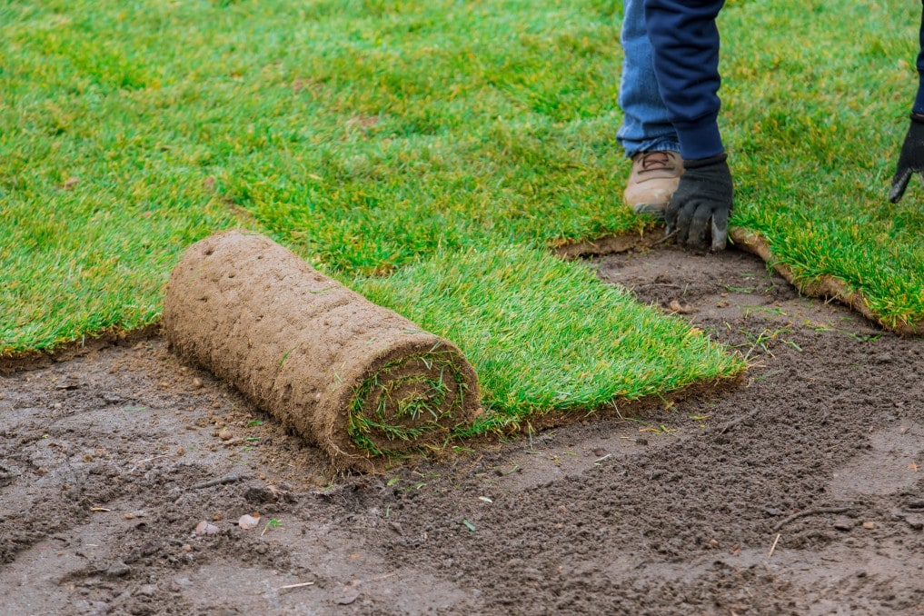 Man laying grass green rolls