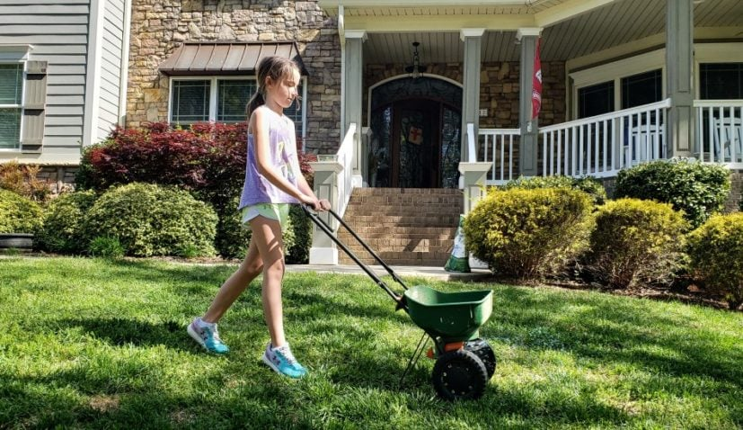 Girl applying grass seed to green lawn