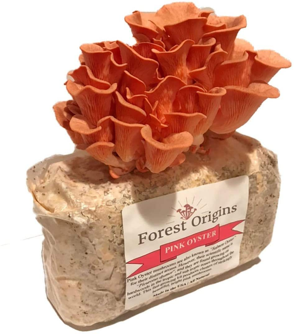 Pink Oyster Mushroom Growing Kit