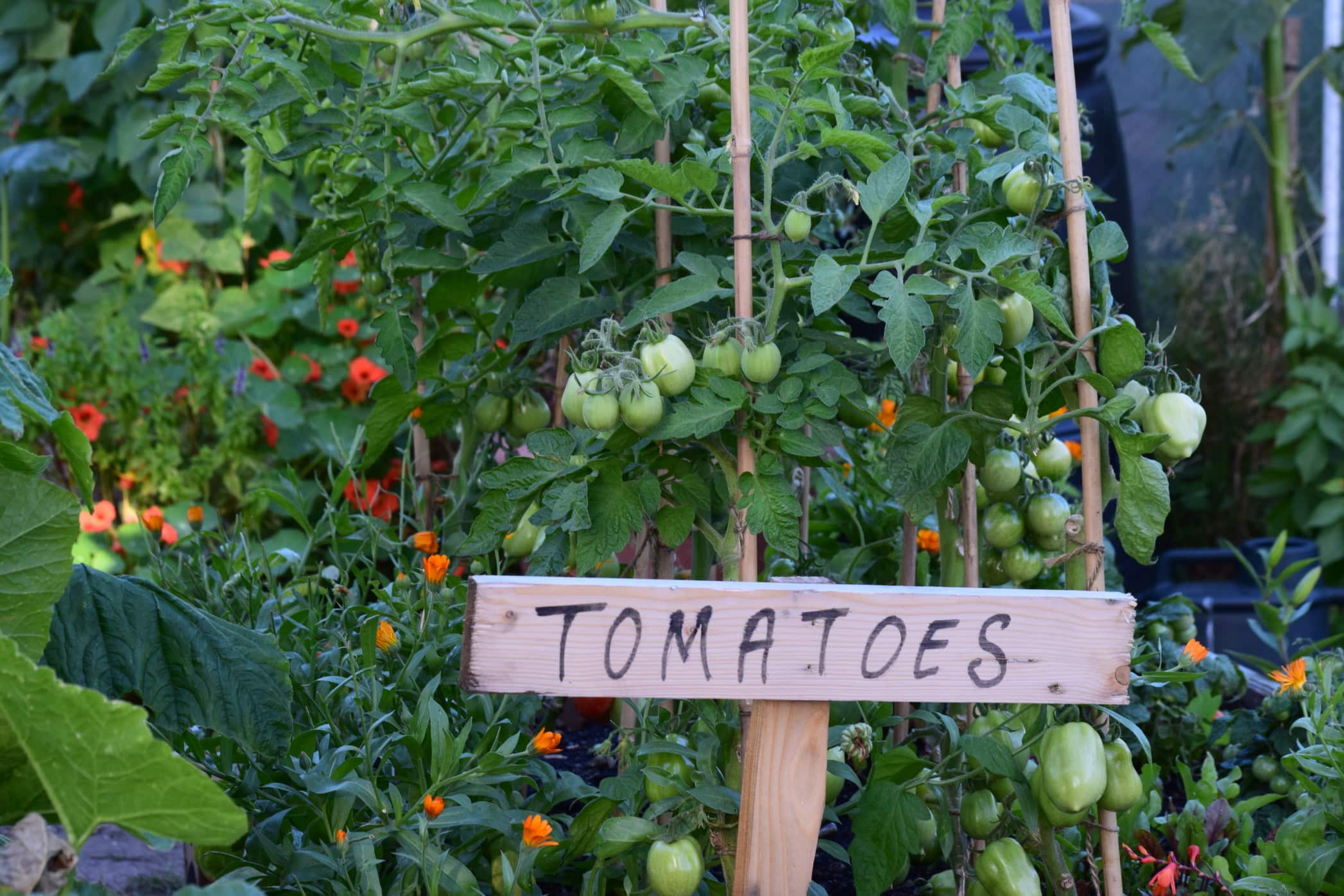 home garden tomatoes sign