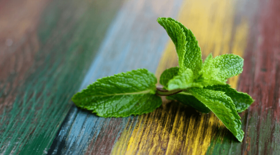 mint sprig on table