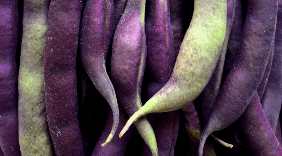 purple shell beans closeup