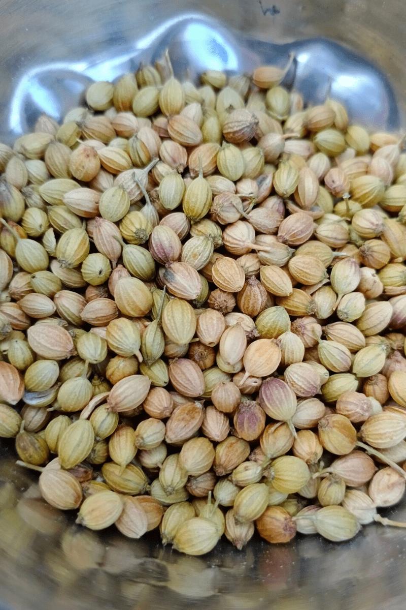 Unbroken Coriander Seeds