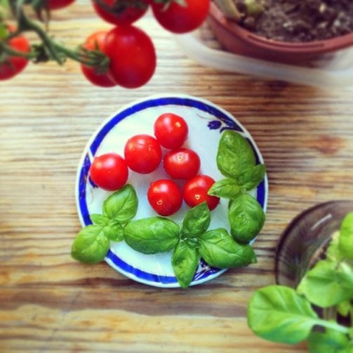 tomato and basil on a plate