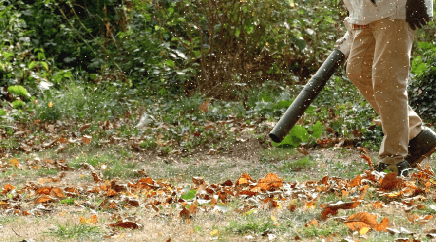 man carrying leaf blower through fall leaves on ground