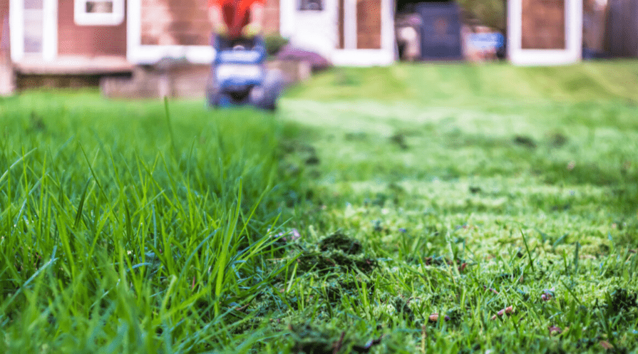 a lawn being mowed with the overgrown grass in the foreground