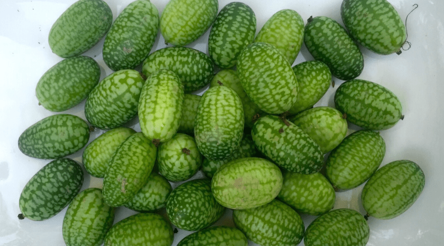 a pile of mini cucumbers on a white tile counter top