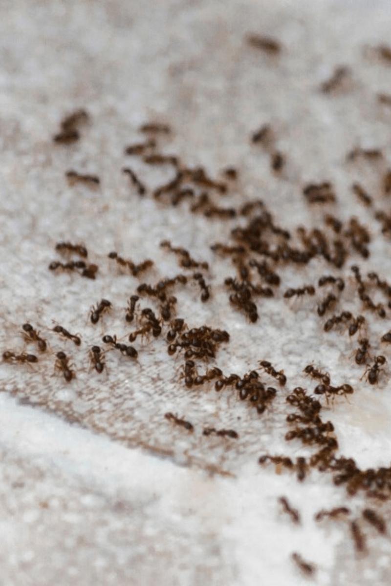 ants on indoor tile