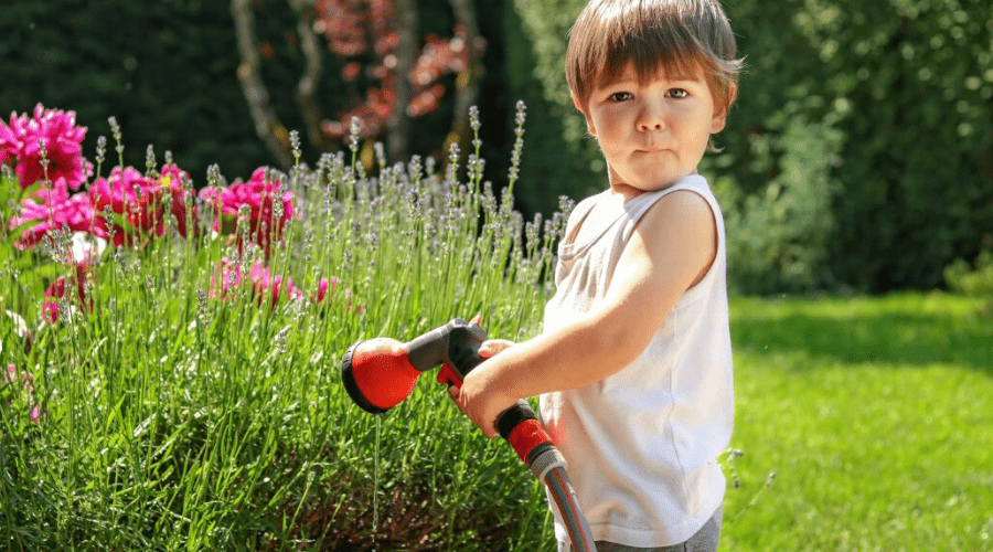 small boy watering lavender outdoors with spray nozzle
