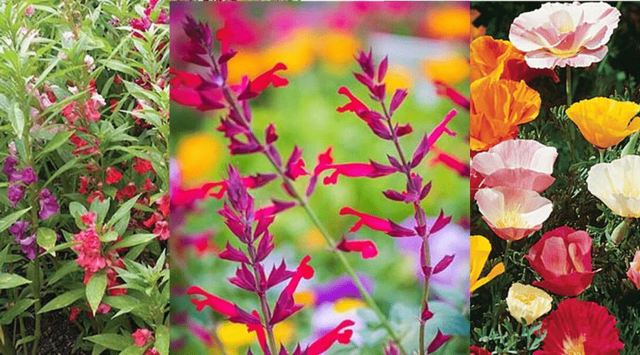 flower varieties burpee