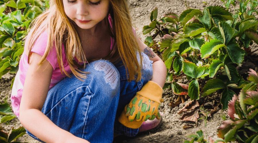 girl harvesting strawberries in home garden