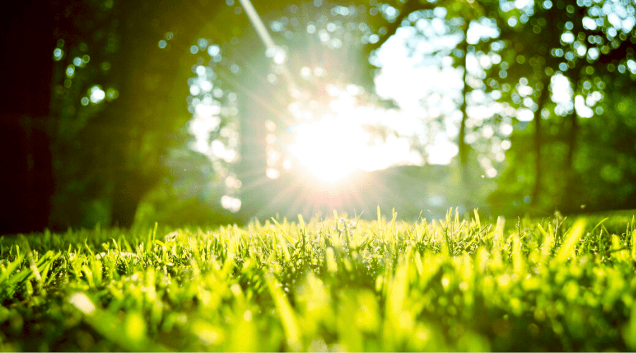 sun shining on grass in backyard
