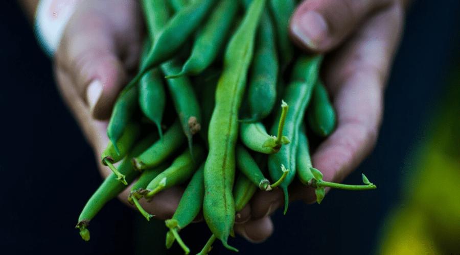 hands holding fresh green beans