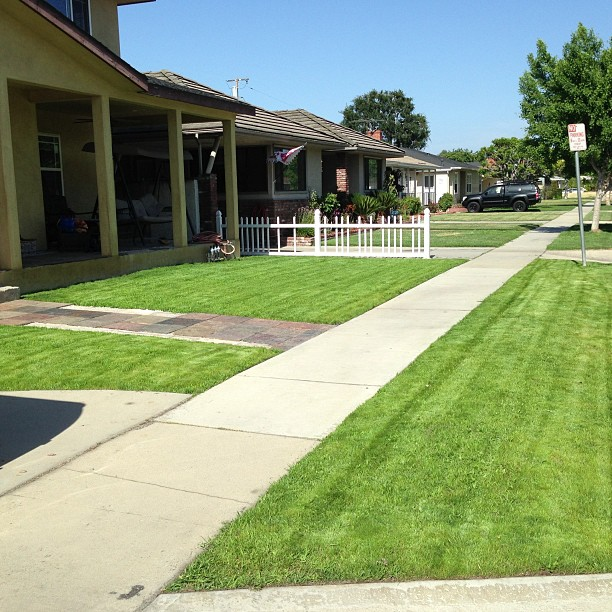 a suburban lawn that has been mowed and edged