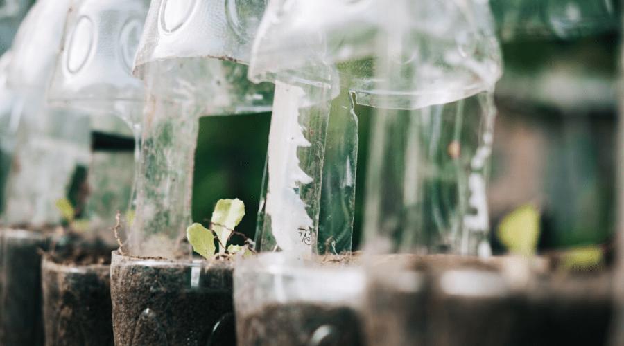 growing lettuce indoors in plastic bottle planters