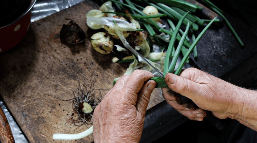cutting onions to plant in soil
