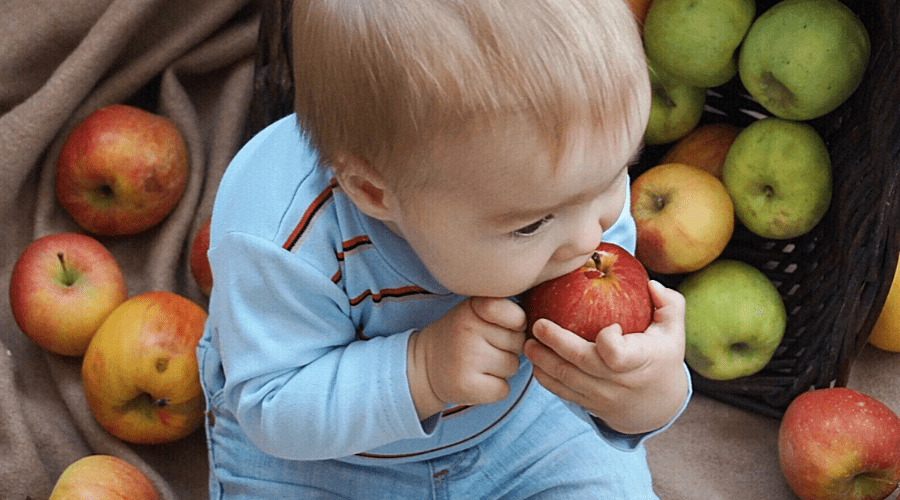 toddler biting apple sitting in bag of apples
