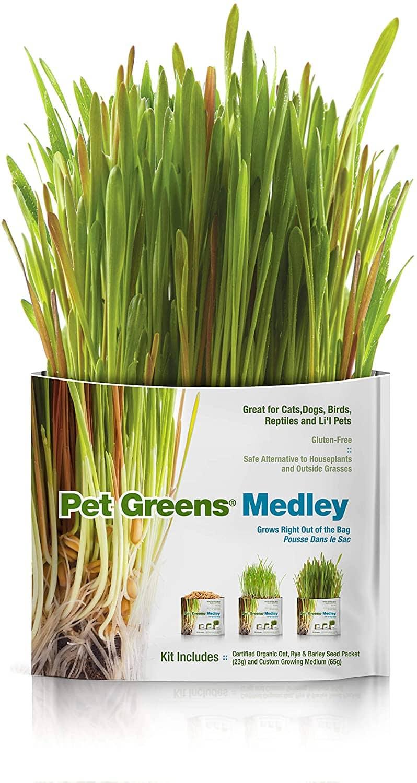 Pet Greens Self-Grow Pet Grass Kit