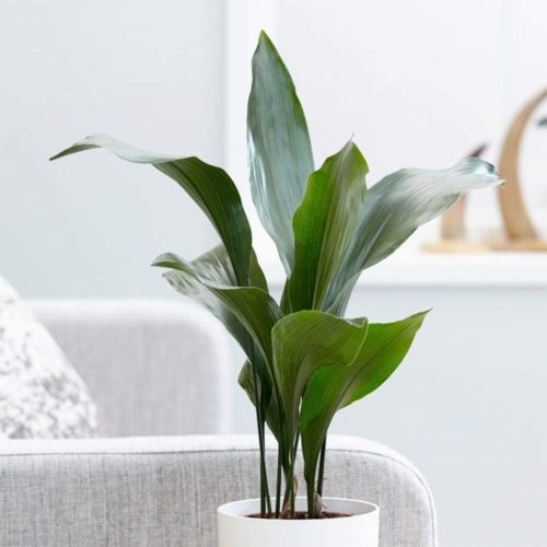 Live Plants from American Plant Exchange on Amazon