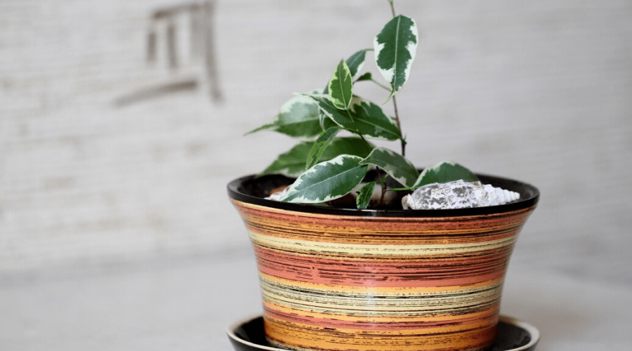 A potted plant on a table indoors in cool lighting winter