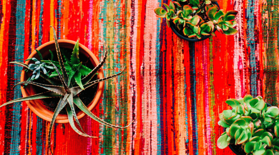 hot weather plants thrive indoors from above succulents on colorful tablecloth