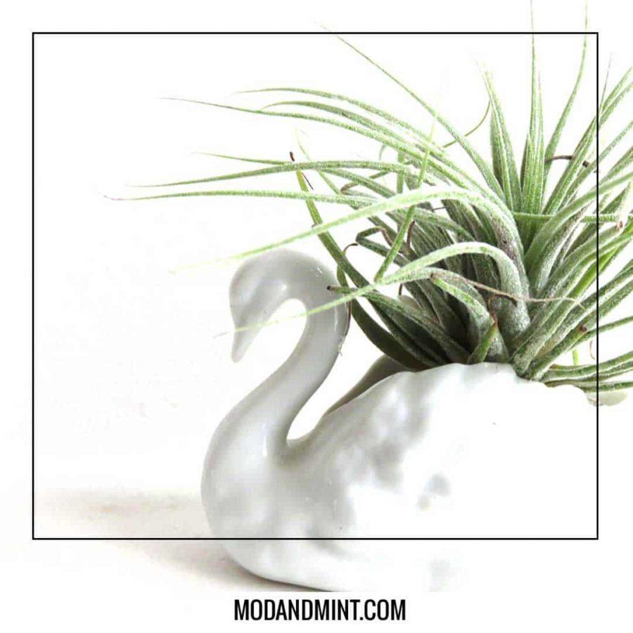 swan planter for air plant tillandsia