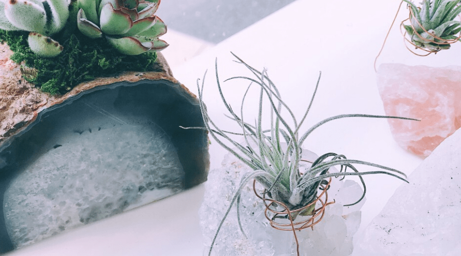 air plants and white stones on display