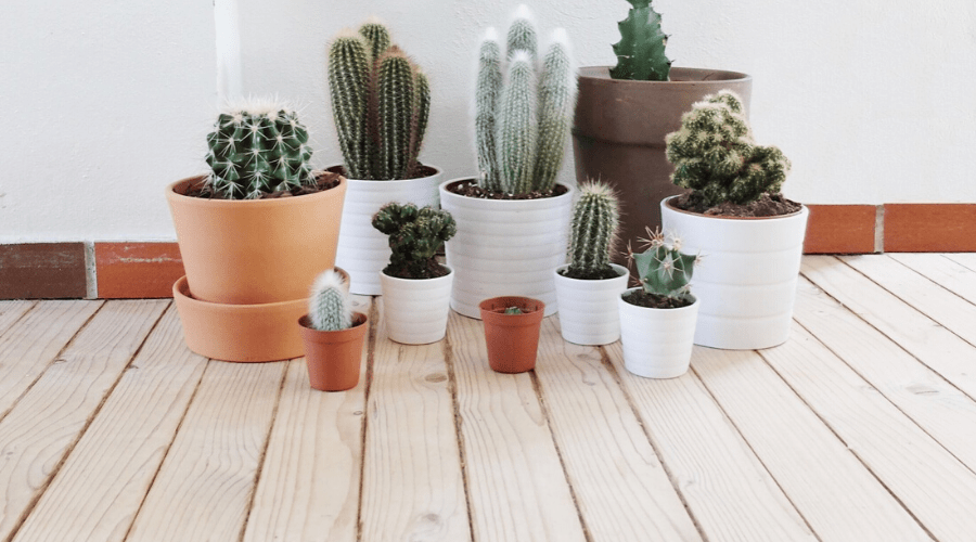 assorted cacti in mismatched pots indoors on wooden floor