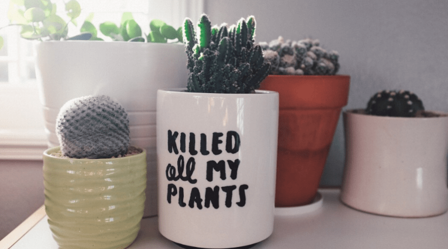 small succulents planted in mugs and small pots in a windowsill