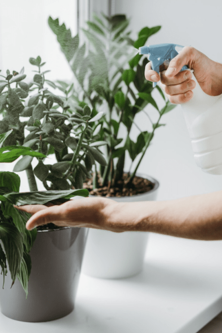 misting water on houseplants in windowsill