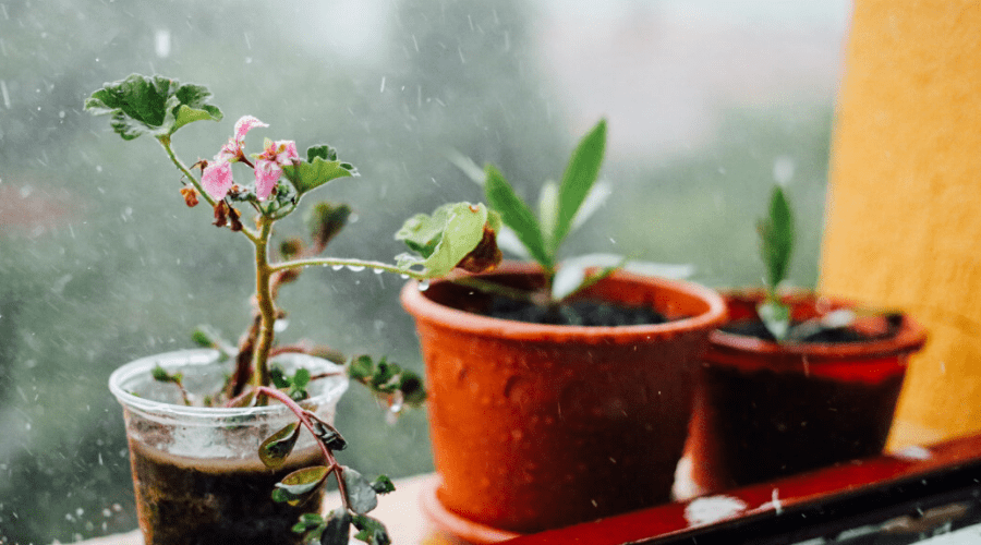 houseplants in pots on windowsill in the rain
