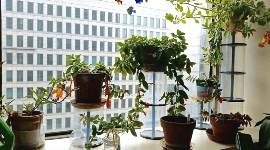 caring for indoor plants in windowsill healthy houseplants