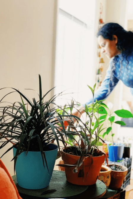 caring for indoor plants at home soil and water light needs