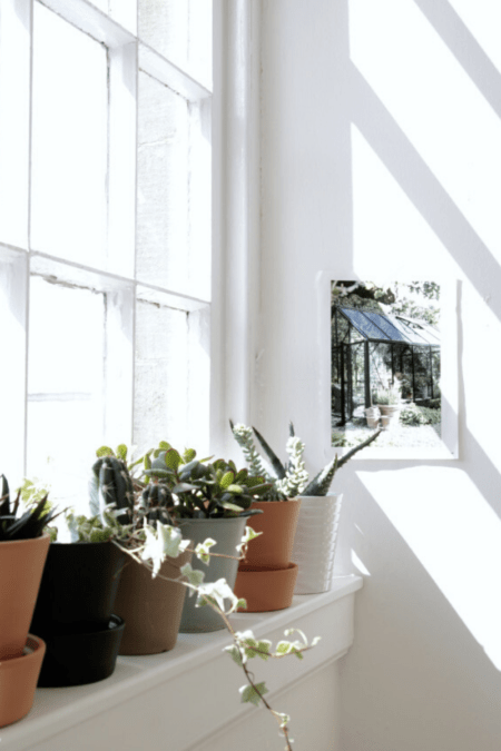 bright light on a windowsill of potted indoor plants