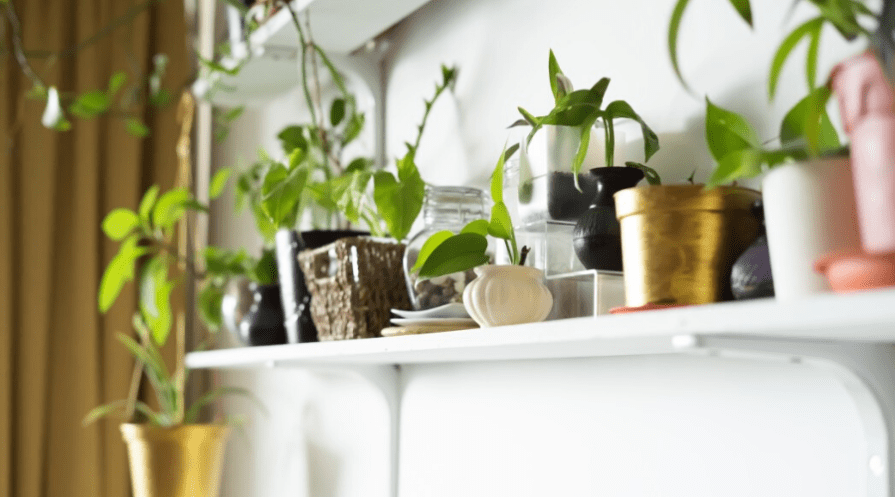 a shelf of indoor plants including pothos ficus christmas cactus